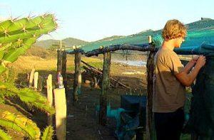 Erfahrungsbericht Freiwilligenarbeit Costa Rica Meeresschildkröten