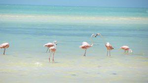 Auslandspraktikum Mexiko Tourismuspraktikum