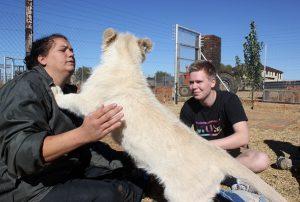 Freiwilligenarbeit Südafrika Big Cat