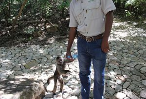 Freiwilligenarbeit Südafrika Wildlife