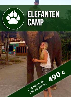 Freiwilligenabreit Thailand Elefantencamp