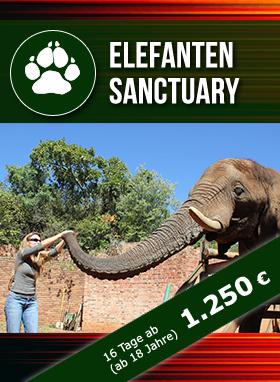 Freiwilligenarbeit Südafrika Elefantenprojekt