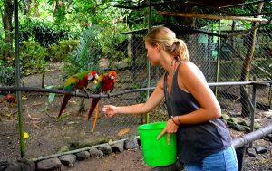 Wildlife Costa Rica