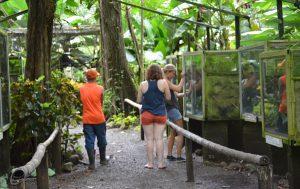 Wildlife Costa Rica Freiwilligenarbeit