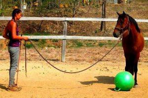 Unterricht Costa Rica Pferde