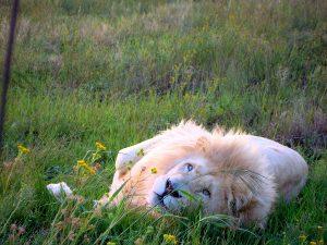 Erfahrungsbericht Südafrika Wildlife