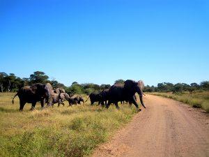 Erfahrungsbericht Südafrika Wildlife Sara