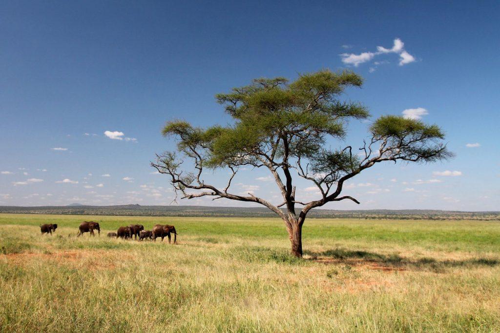 Freiwilligenarbeit in Tansania