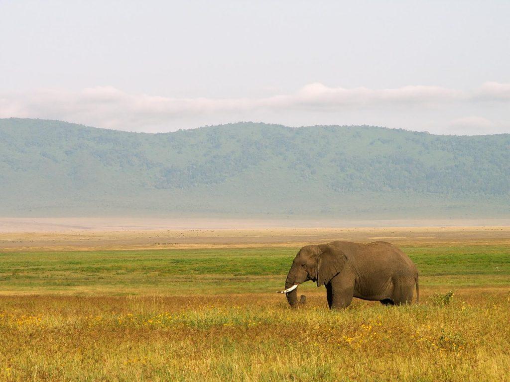 tansania freiwilligenarbeit elephant