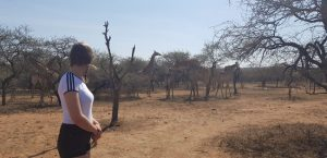 Nationalpark Südafrika Wildlife