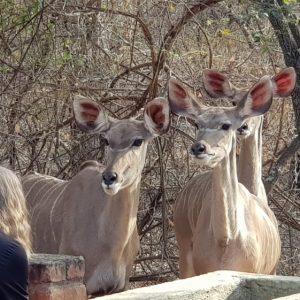 Wildlife Südafrika Jamso Trainee