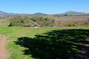Freiwilligenarbeit Südafrika Wildlife Löwen