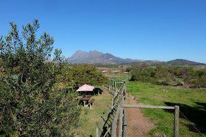 Freiwilligenarbeit Südafrika Löwenprojekt