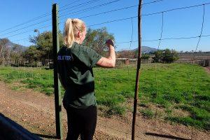 Volunteer Südafrika Löwenfarm