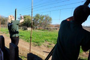 Freiwilligenarbeit Südafrika, Volunteering