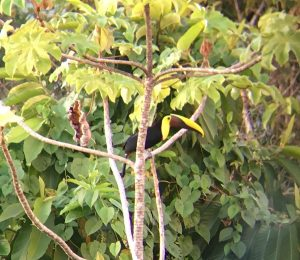 Erfahrungsbericht Costa Rica Auslandsaufenthalt Papagei