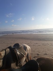 Pferde Strand Costa Rica