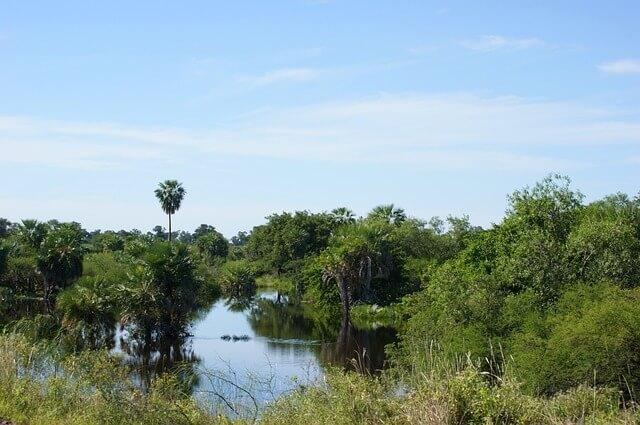 Paraguay swamp