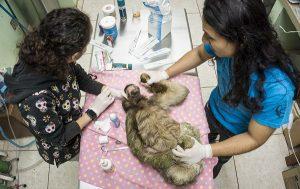 Praktikum Costa Rica Tierarzt