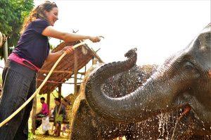 Waschen Elefanten Thailand