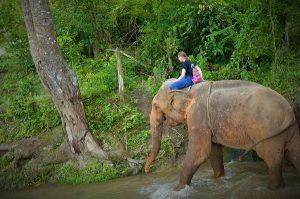 Volunteering Thailand Elefant Sancturay Reiten