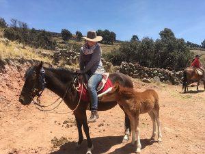 Auslandspraktikum Reiten Peru