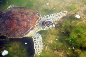 Freiwilligenarbeit Meeresschildkröten Südamerika