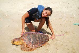 Meresschildkröte Volunteer Südamerika