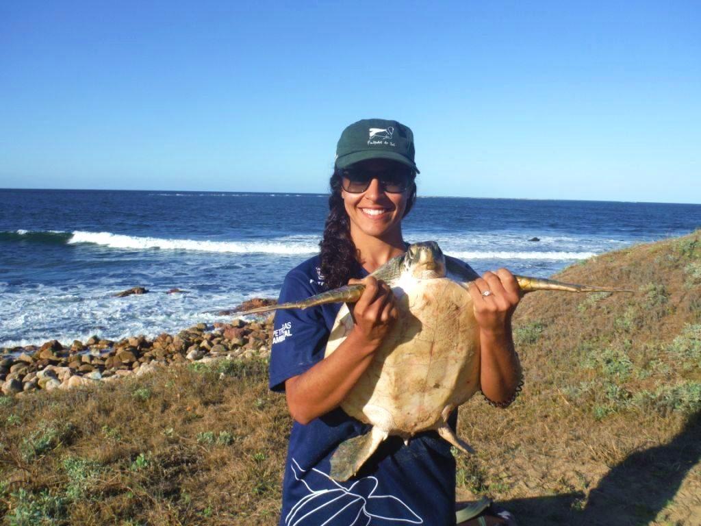 Uruguay Volunteer Schildkröte