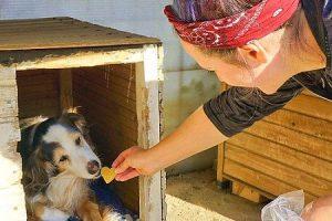 Volunteer Griechenland Straßenhunde