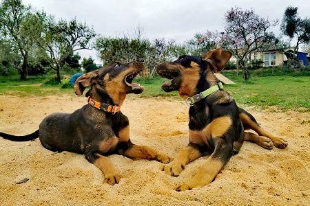 Straßenhundeprojekt Portugal
