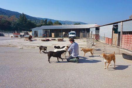 Tierheim Griechenland Straßenhunde