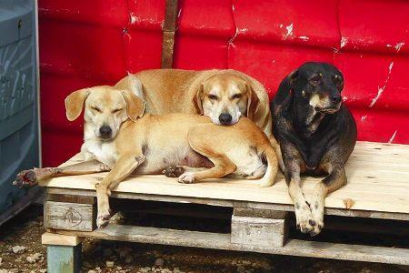 Freiwilligenarbeit Griechenland Straßenhunde