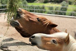 Pferderanch in Griechenland