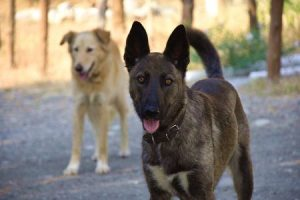 Hunde auf der Ranch