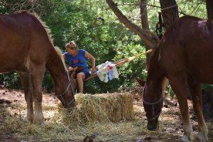Pferde Reitpraktikum im Ausland