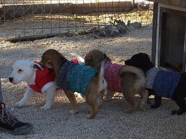 Volunteer Straßenhunde Europa