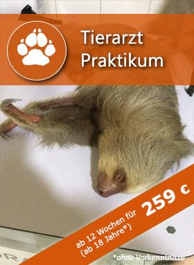 Tierarzt Praktikum
