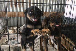 Hunde Griechenland Freiwilligenarbeit