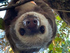 Lateinamerika Freiwilligenarbeit, Wildlife Projekt