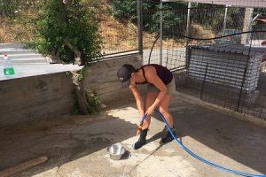 Straßenhunde in Griechenland, Volunteer