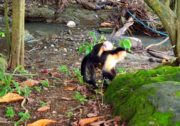 Erfahrungsbericht Costa Rica Wildlife